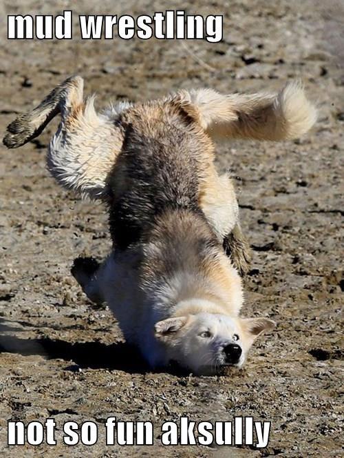 animals dogs caption funny - 8555936768