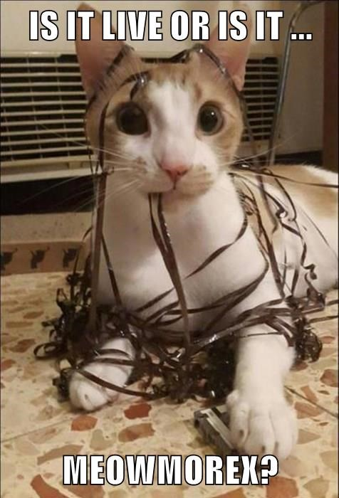 animals caption Cats funny - 8555964416