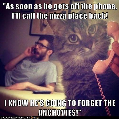 animals pizza phone human Cats - 8555985664