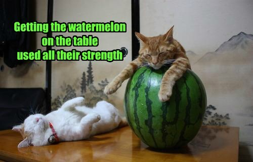 used strength watermelon caption Cats