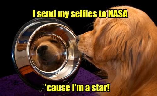 nasa,dogs,star,selfie,caption