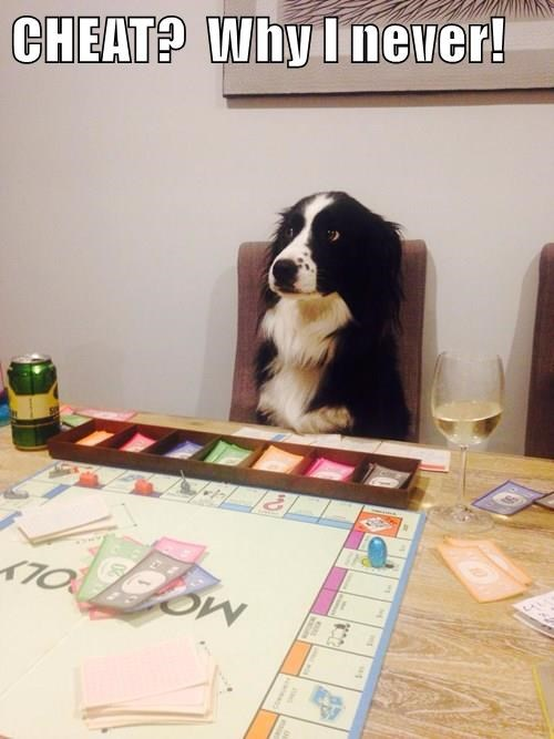 animals dogs never cheat caption - 8556289536