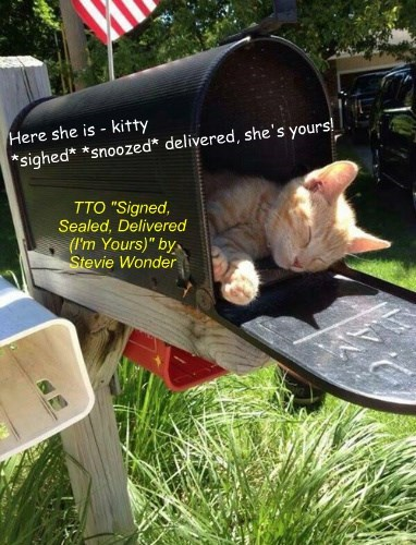 """Kitty Delivery"" (TTO ""Signed, Sealed, Delivered (I'm Yours)"" by Stevie Wonder)"