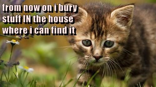from now on i bury stuff IN the house where i can find it