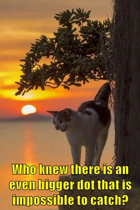 lolcats,red dot,sun,lasers,Cats,sunset