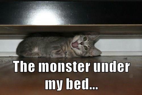 animals kitten cute caption Cats funny - 8556605952