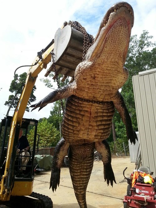 Alabama hunters catch an insanely big alligator.