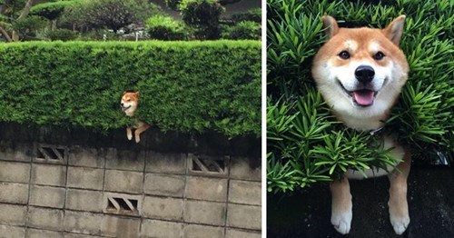 funny dogs image I'm Fine. This Is My Life Now.