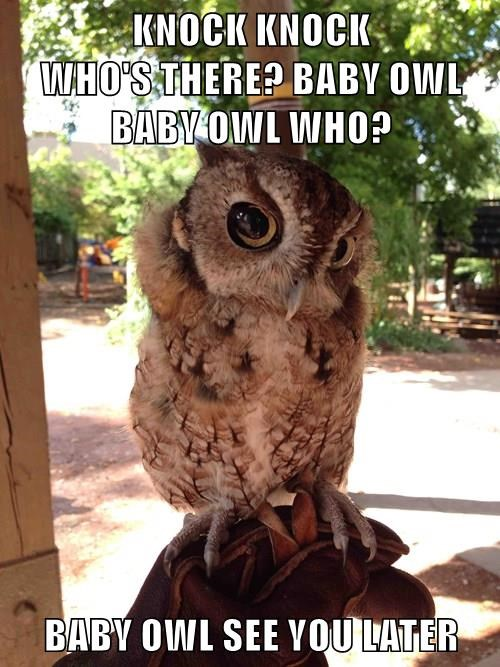 knock knock,captions,owls,funny