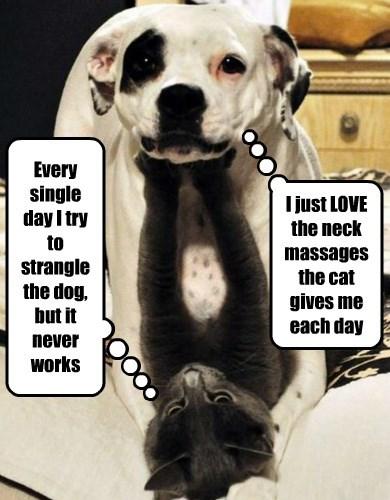 dogs massage caption Cats funny - 8556818432