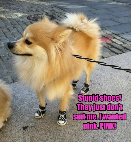 shoes dogs pink caption funny - 8556820480
