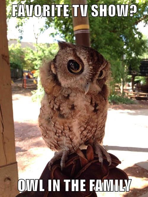 animals captions puns owls funny - 8556920832