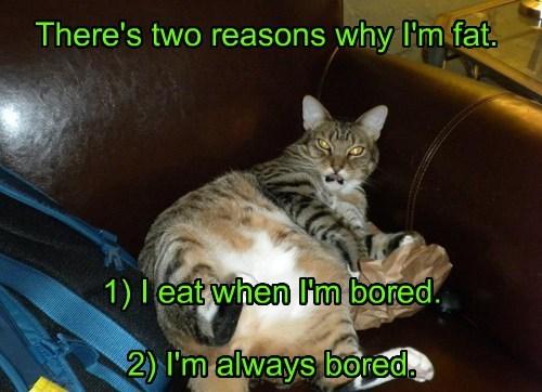 caption Cats funny - 8557019648