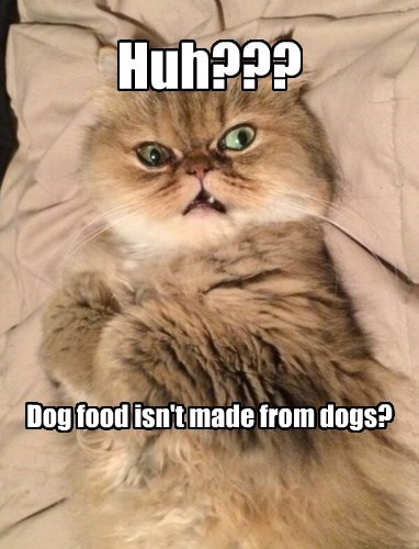 captions Cats funny - 8557028352