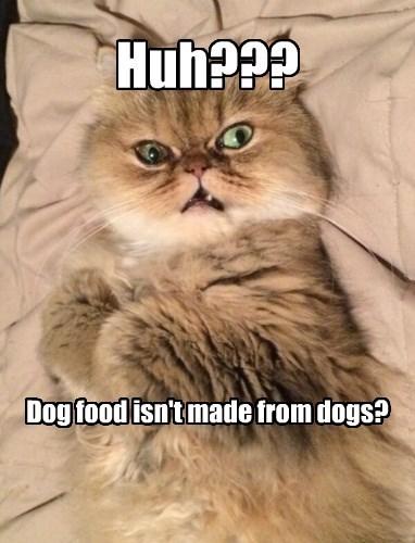 captions Cats funny - 8557028352