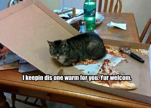 pizza captions Cats funny - 8557062400