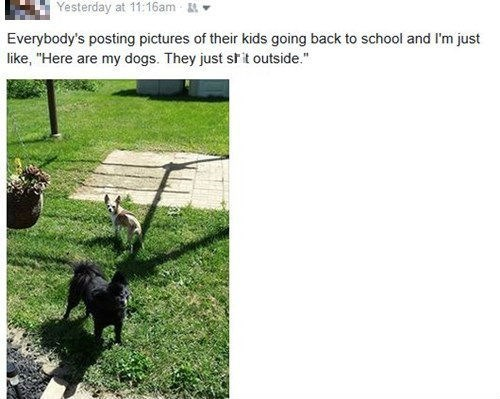 dogs poop facebook back to school animals - 8557212160