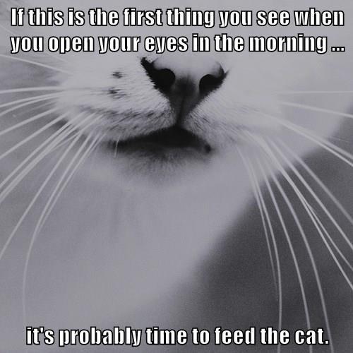 animals captions Cats funny - 8557217024