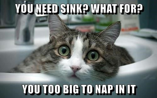 animals sink caption Cats funny - 8557268992