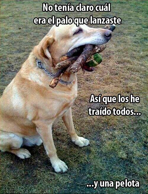 buen perro