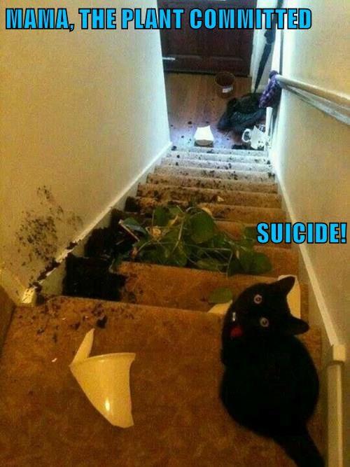 animals plants Cats funny - 8557286656