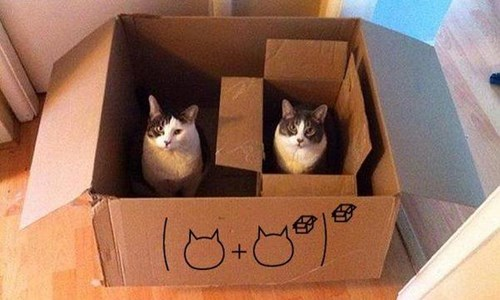 cute cats image Now Here's a Math Problem I Think I Can Handle