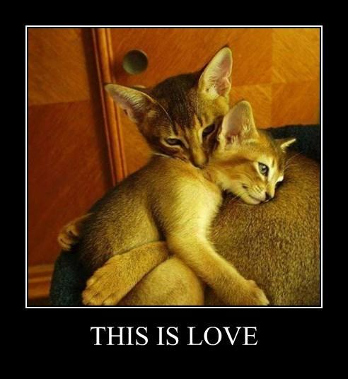 hugs sweet caption Cats - 8557337600