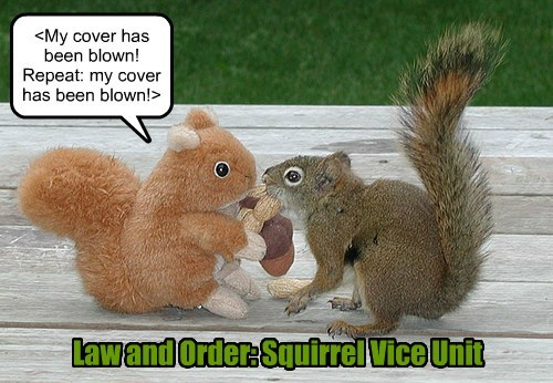 <My cover has been blown! Repeat: my cover has been blown!> Law and Order: Squirrel Vice Unit