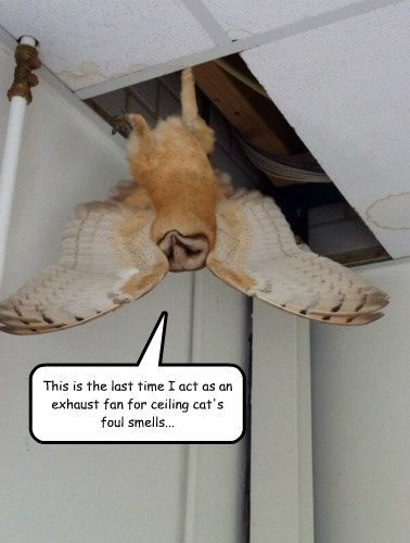 captions Owl funny - 8557483520