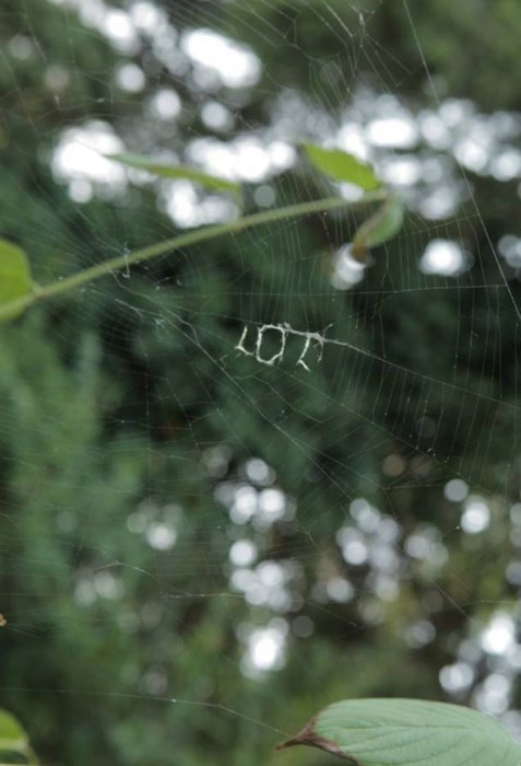 Spider web found that says 'lol'.