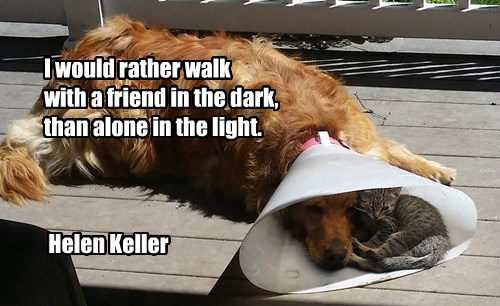 helen keller dogs friends sweet caption quote - 8557550848