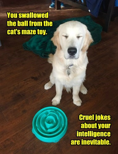 You swallowed the ball from the cat's maze toy. Cruel jokes about your intelligence are inevitable.