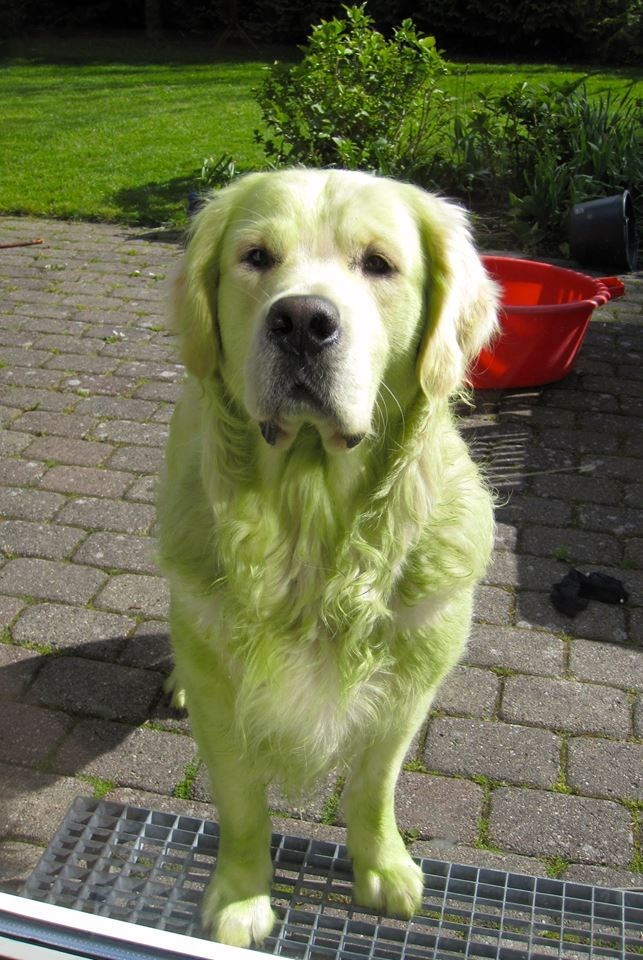 cute dogs image This Noble Lad Is Pretending He Didn't Just Get Grass Stains From Rolling on Lawn