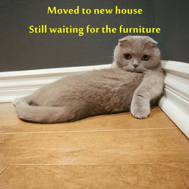 Moved to new house                                                      Still waiting for the furniture