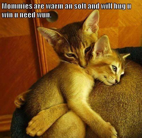 animals aww kitten cute sweet caption Cats - 8557664256