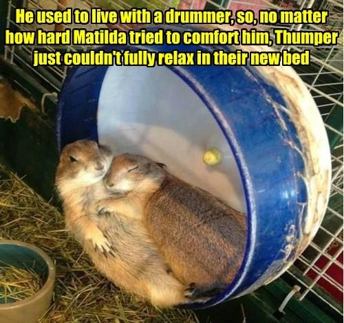 hamster drums funny - 8557743104