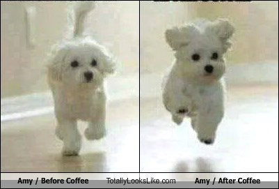 Amy / Before Coffee Totally Looks Like Amy / After Coffee