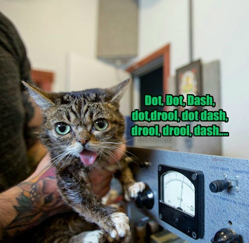 lil bub,caption,Cats,funny