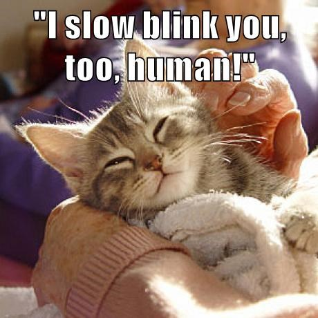 """""""I slow blink you, too, human!"""""""