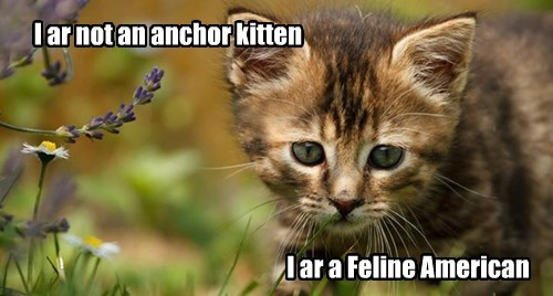 kitten,caption,funny