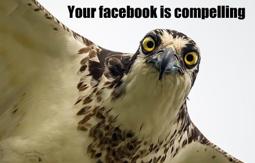 birds,facebook,funny,captions
