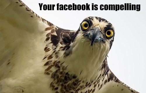 birds facebook funny captions - 8558102528