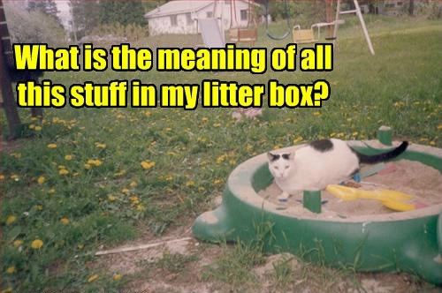 What is the meaning of all this stuff in my litter box?