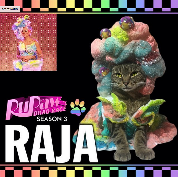 RuPaws Drag Race Instagram shows a kitty dressing in the drag queen style.