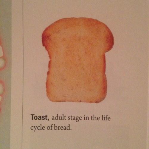 funny memes adult bread toast
