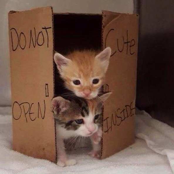 funny-walking-dead-kittens-dont-open-dead-inside