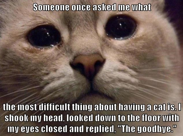 """Someone once asked me what  the most difficult thing about having a cat is. I shook my head, looked down to the floor with my eyes closed and replied, """"The goodbye."""""""