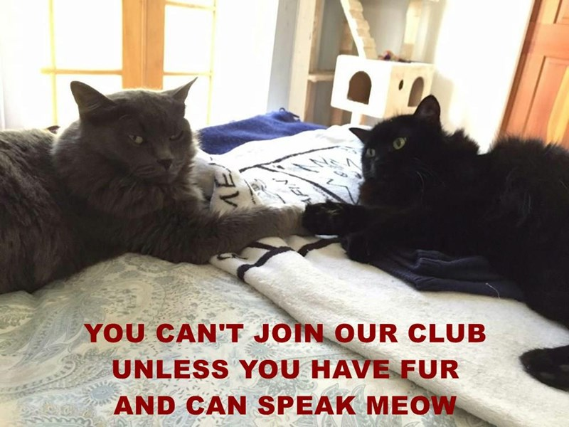 YOU CAN'T JOIN OUR CLUB                    UNLESS YOU HAVE FUR                  AND CAN SPEAK MEOW
