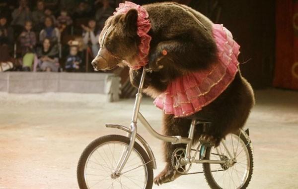 Family wants Yellowstone to train its bears.