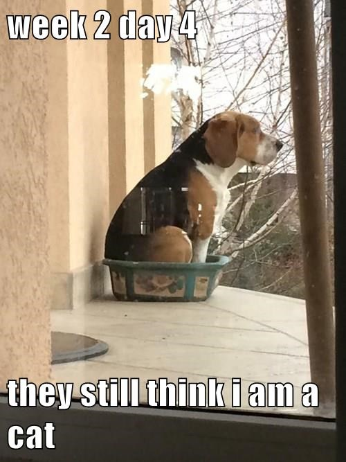animals dogs captions funny - 8558475264